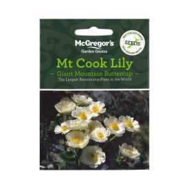 Mt Cook Lily (Native New Zealand Seeds)
